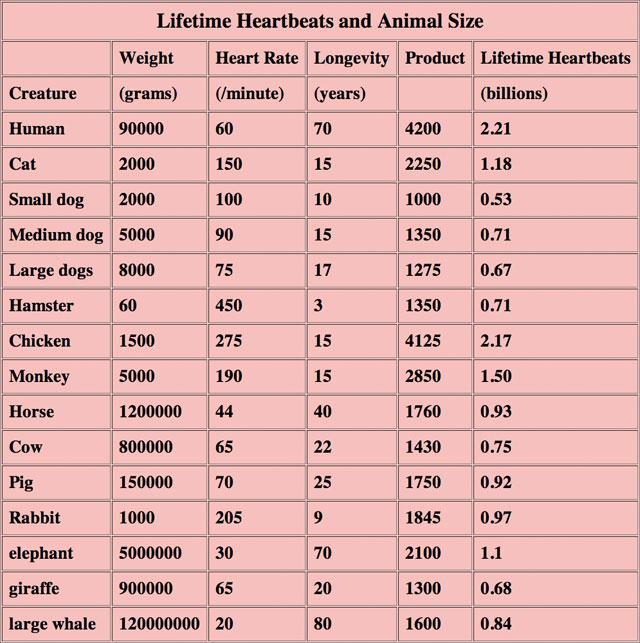 one-billion-heartbeats